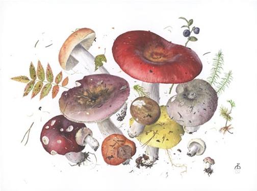 mushroom-illustration